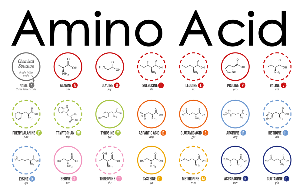 What are amino acids arginineglutaminemethionineornithine what are amino acids altavistaventures Image collections