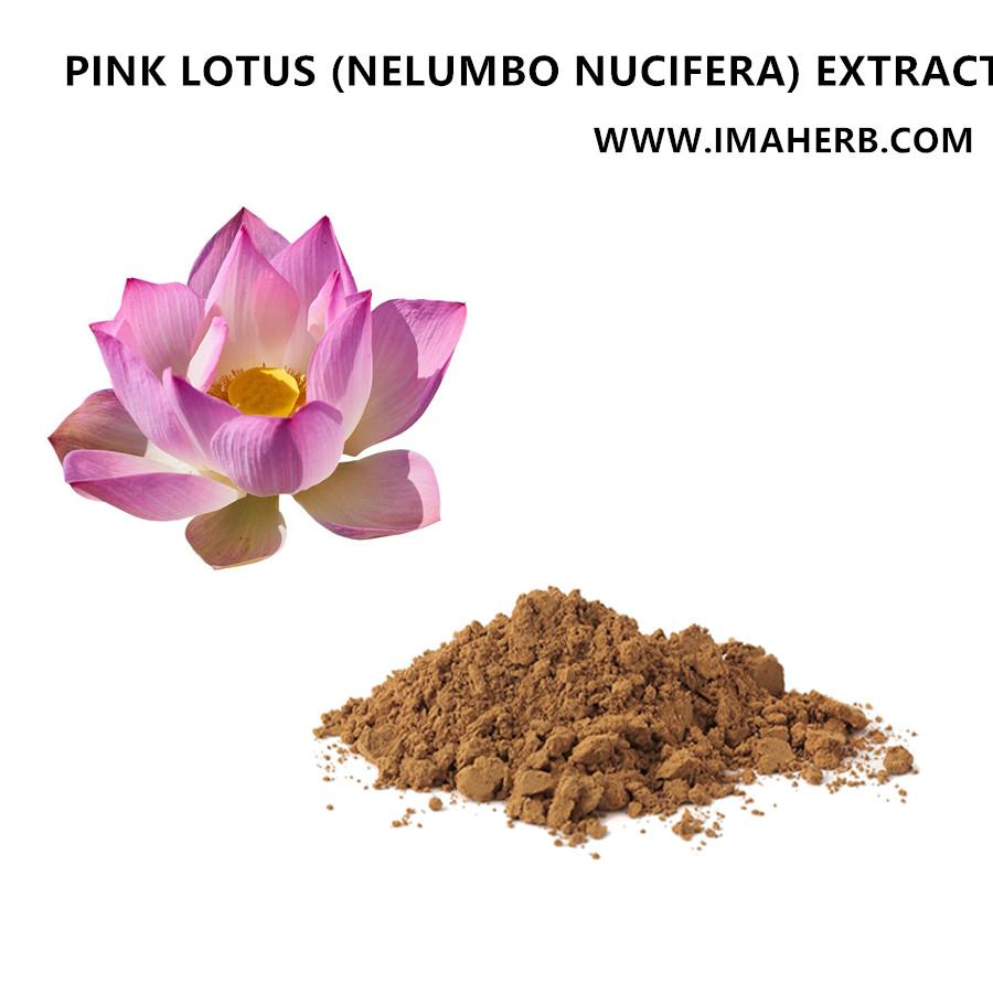 Pink Lotus Nelumbo Nucifera Extract