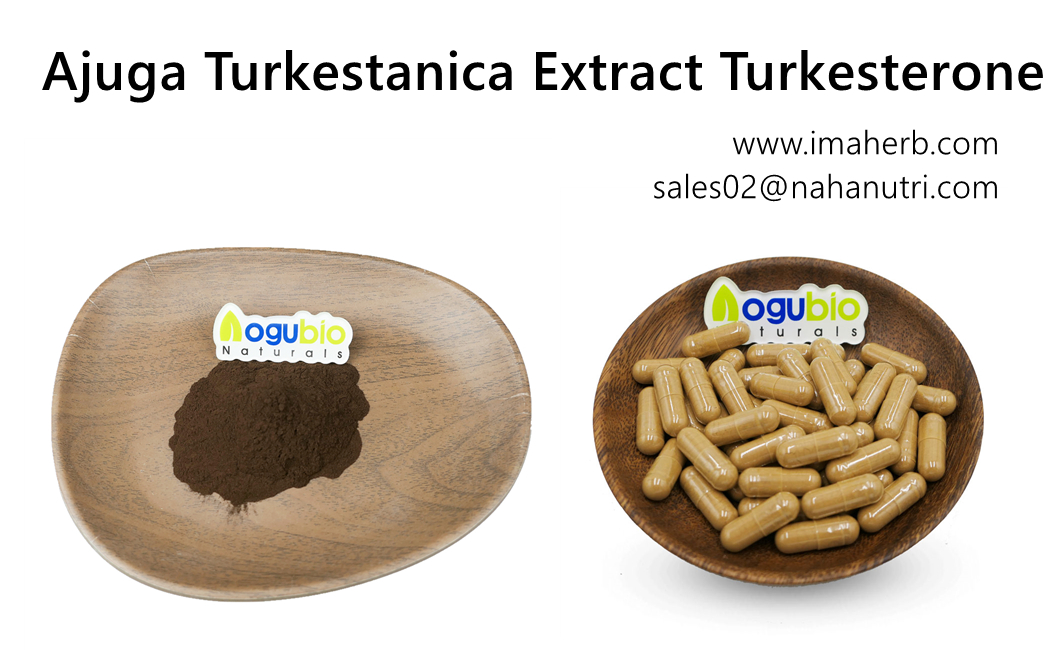 Amazon Hot Sellers IMAHERB suministra turkesterona a granel orgánica de alta calidad OEM 2% 10% Suplementos en cápsula para culturismo Cápsula de extracto natural de Ajuga Turkestanica